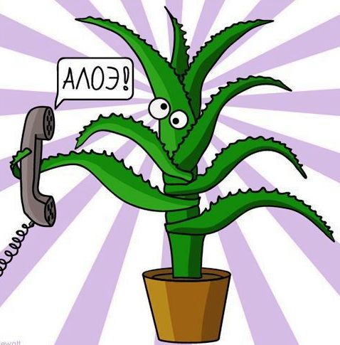 July Aloe